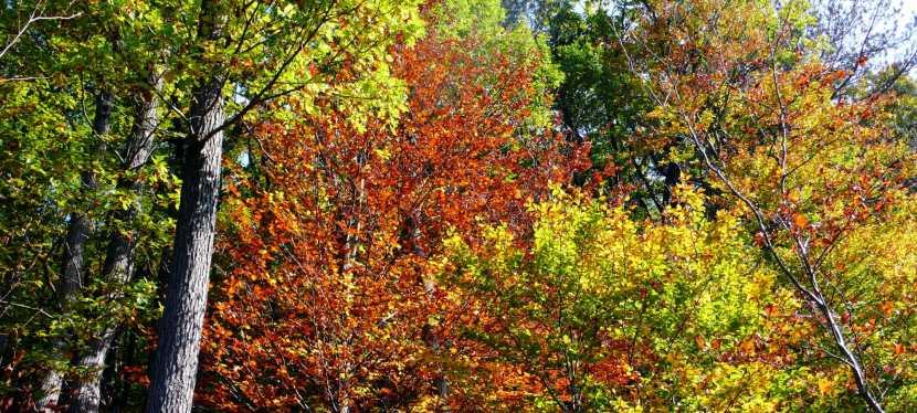 Herbstwanderung im Wienerwald