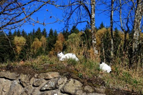 Katzen am Weg zur Burg Piberstein