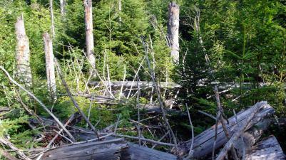 Tierfreigelände NP Bayerischer Wald