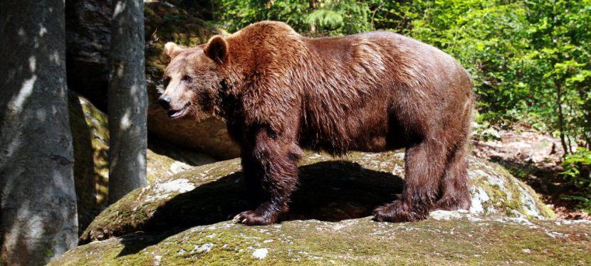 Bohnen und Bären im BayerischenWald