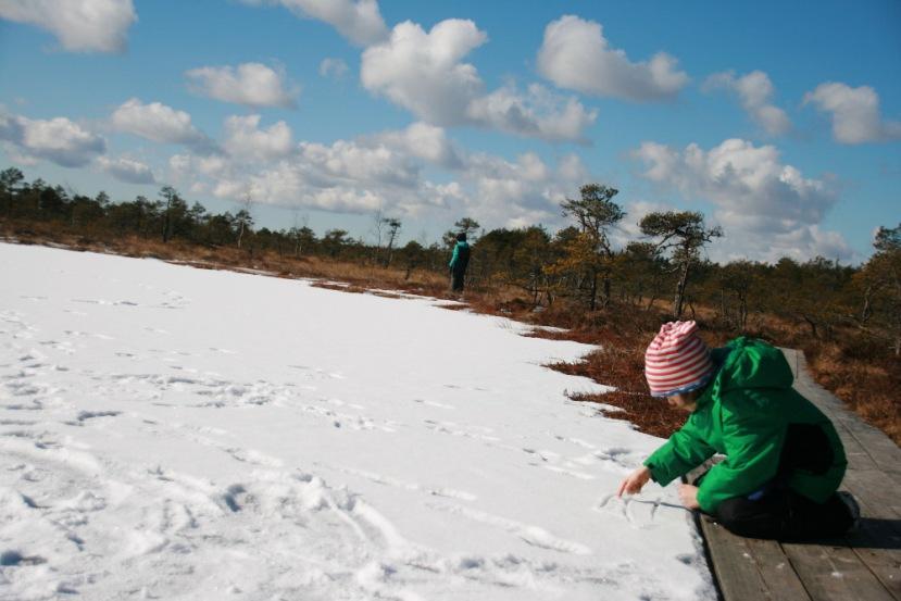 Soomaa: Durchs gefroreneMoor